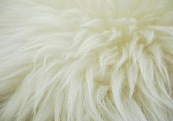 tout-savoir-sur-l-isolation-en-laine-de-mouton