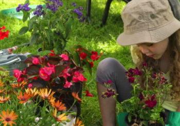 Jardiner-à-la-campagne